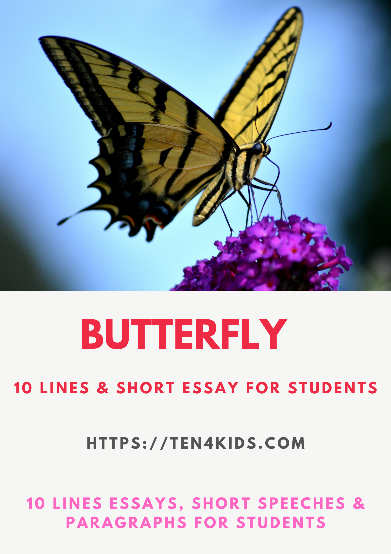 Essat on Butterfly for students